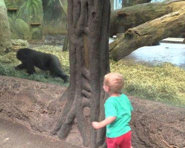 Gorila Desafia Criança Para Brincar e o Momento Foi Simplesmente Adorável 1