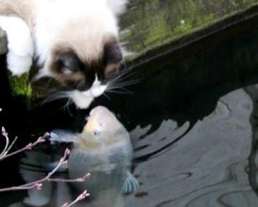 Gato e Peixe Criam Incrível Relação De Amizade 4