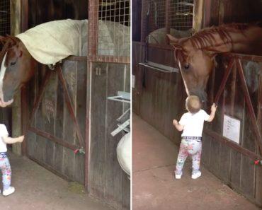 Menina Apaixonada Por Cavalos Faz Questão De Cumprimentar Cada Cavalo Todas As Manhãs 1