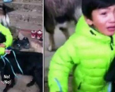 Menino De 3 Anos Salva Cabra De Ser Sacrificada Em Ritual Religioso 2