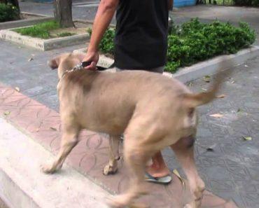 Mãe Gata Protege Ferozmente a Sua Cria De Enorme Cão 4