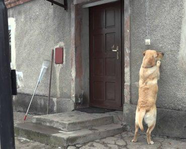 Cão Educado Toca à Campainha Sempre Que Quer Entrar Em Casa 8