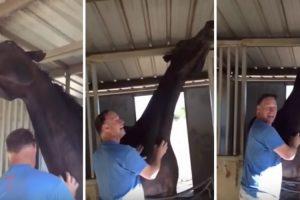 Veja Como Reage Este Cavalo Quando Homem Tenta Ir Embora 10