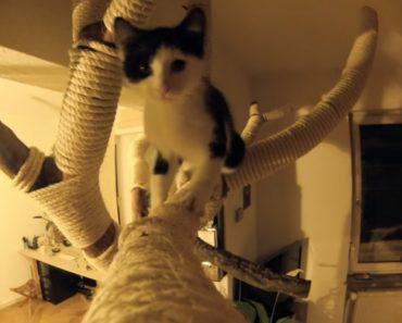 Dono Encontra a Solução Caseira Perfeita Para Os Seus Dois Gatos Não Estragarem Os Móveis 3