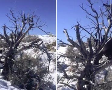 Cão Obcecado Por Pássaro Sobe Árvore Para Tentar Chegar Até Ele 2