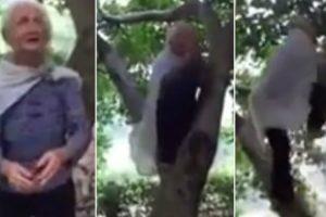 Mulher De 97 Anos Sobe Árvore Como Se Fosse Uma Jovem 10