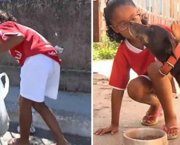 Menina De 7 Anos Apanha Latas Para Comprar Ração Aos Cães De Rua 8