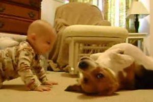 Pais Filmam Comovente Primeiro Encontro Entre Bebé e Cão 10