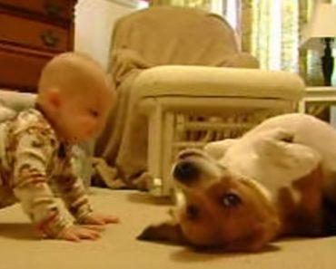 Pais Filmam Comovente Primeiro Encontro Entre Bebé e Cão 6
