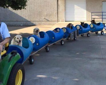 Homem De 80 Anos Cria Carruagens Para Passear Os Vários Cães Abandonados Que Resgatou 3