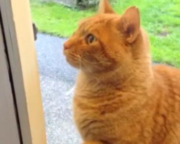 Gato Inteligente Toca à Campainha Sempre Que Quer Entrar Em Casa 6