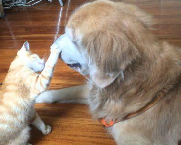Ficará Com o Coração Derretido Ao Ver Como o Cão Recebe o Gatinho Que Os Seus Donos Resgataram 7