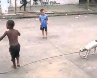 Esta Cadela Não Só Brinca Com As Crianças Como Ainda Ajuda a Saltarem à Corda 8
