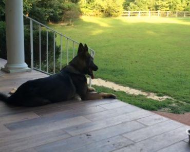 Veja o Que Faz Este Cão Quando a Sua Dona Lhe Diz Que Teve Um Dia Difícil 9