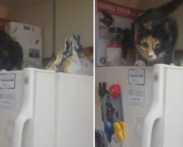 Lux, o Gato Que Gosta De Ir à Pesca No Congelador Lá De Casa 1