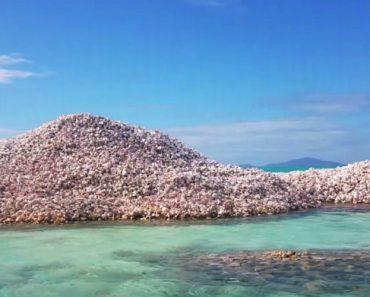 Conheça a Ilha Totalmente Composta Por Milhões De Conchas 8