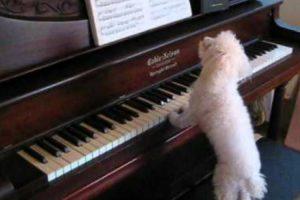 Foi Encontrado o Pianista Do Século 10