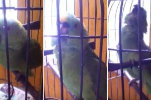O Que Acontece Quando Um Papagaio Vive Numa Casa Com Bebés 5