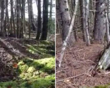 Estranho Fenómeno Da Natureza Em Floresta Do Canadá 6