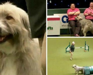 Cão Faz Péssima Prova De Obstáculos, Mas Conquista a Plateia Com a Sua Personalidade 7