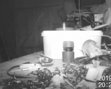 Rato Que Vive Em Armazém Arruma o Espaço Todos Os Dias 3