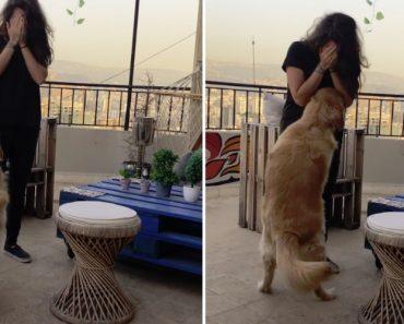 Cão Tem Surpreendente Reação Ao Ver a Dona a Chorar 1