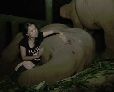 Mulher Canta Encantadora Música De Embalar Para Adormecer Elefante 1