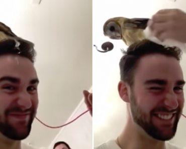 Coruja Deixa Presente Em Cima Da Cabeça De Homem Que Quis Fazer Selfie Com Ela 5