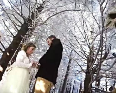 Cão Filma o Casamento Mágico Dos Seus Donos 6
