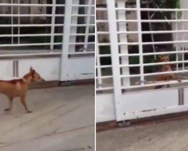 Como Um Bom Cão De Guarda Retorna Ao Seu Posto 4