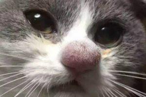 10 Gatos Que Foram Picados Por Abelhas e Vespas 10