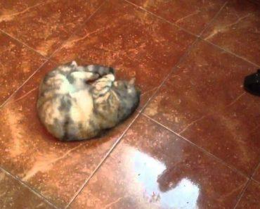 Gato Fica Eufórico Ao Cheirar Lata De Azeitonas 5
