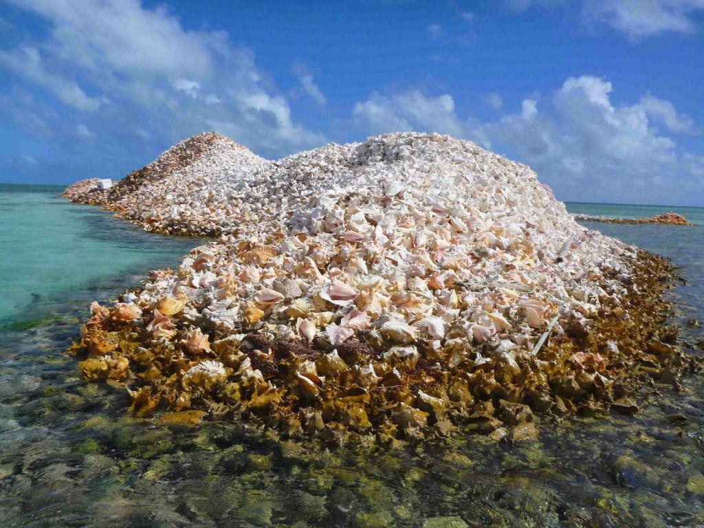 Conheça a Ilha Totalmente Composta Por Milhões De Conchas 2