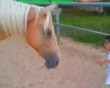 Menino Com Síndrome De Williams e Cavalo Criam Forte Ligação Ao Verem-Se Pela 1ª Vez 8