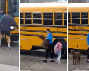 Cabra Tenta Juntar-se Às Crianças Ao Invadir Autocarro Escolar 1