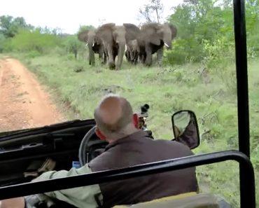 Turistas Ouvem a Explicação De Guia Enquanto Grupo De Elefantes Zangados Os Persegue 7