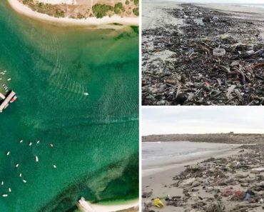 Vídeo Mostra o Mar De Lixo Que Invadiu a Costa De Tavira 9