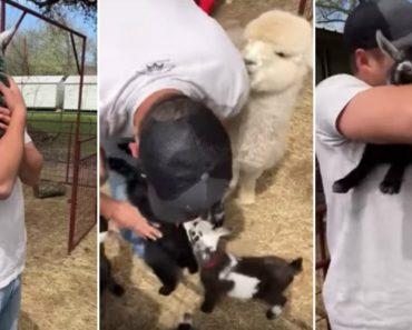 Cabras Bebés Fazem Fila Para Que Homem as Pegue e Lhes Dê Um Abraço Ternurento 9