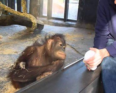 Macaco Tem Reação Adorável Depois De Assistir a Um Truque De Magia 5