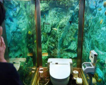 Neste WC Japonês As Paredes Foram Substituídas Por Um Aquário Gigante 5
