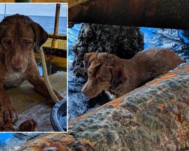 Cadela Perdida No Mar Na Tailândia Encontrada a 260 km Da Costa 6