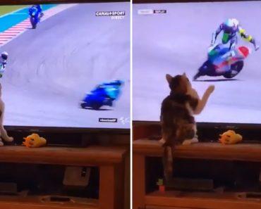 """Gato Com """"Super Poderes"""" Provoca a Queda De Motociclista Só De Tocar Na Tv 8"""
