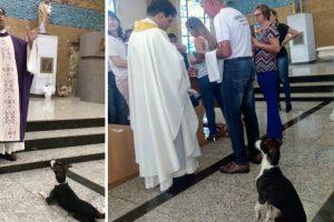Cão Assiste à Missa Até Ao Fim… à Espera Da Hóstia 9