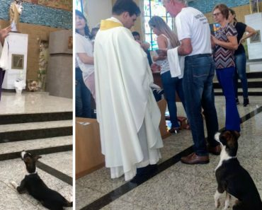 Cão Assiste à Missa Até Ao Fim… à Espera Da Hóstia 8