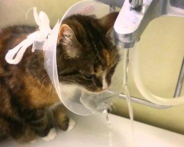 Após Operação Gato Descobre Nova Utilidade Para Funil Colocado No Seu Pescoço 5