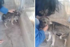 Cão Maltratado Durante Anos Recebe Afeto Pela Primeira Vez, a Sua Reação é Comovente 10