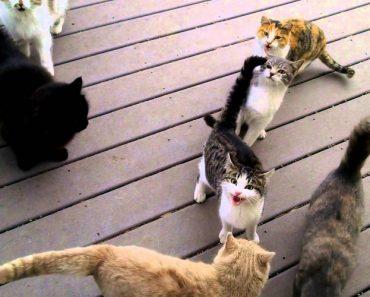O Que Acontece Quando Inúmeros Gatos Querem Ser Alimentados 7