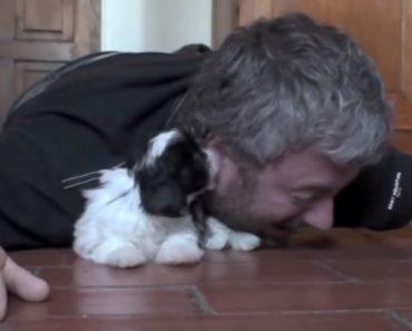 Isto é o Que Acontece Quando Alguém Se Deita No Chão Perto De Um Adorável Cachorrinho 3