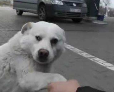 Desconhecidos Aproximam-se De Um Cão De Rua, o Que Ele Faz é Realmente Adorável 9