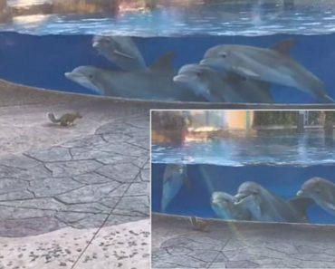 Curiosos Golfinhos Alinham-se Para Observarem Atentamente Os Movimentos De Dois Esquilos 1